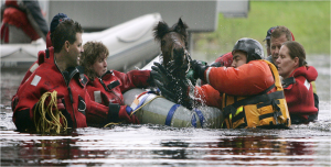 horse-water-rescue-1