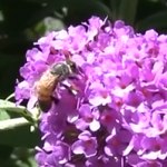 Bees and Beekeeping in Sonoma