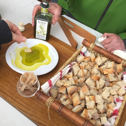 Olive Oil tasting at McEvoy Ranch