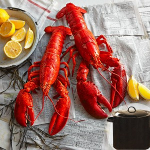 fresh-lobsters