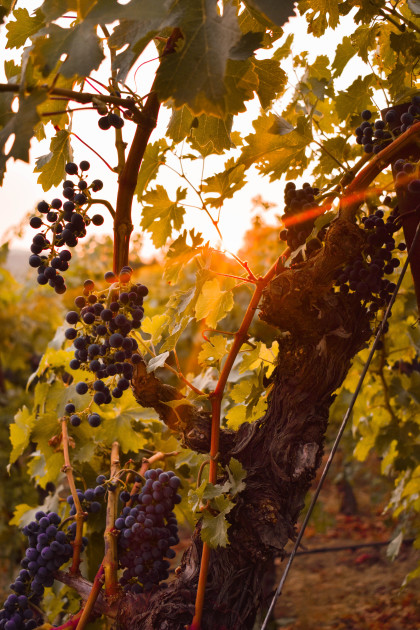 09-SEP-SV-Marvin Jason Ramirez-Fall Sunrise in Sonoma