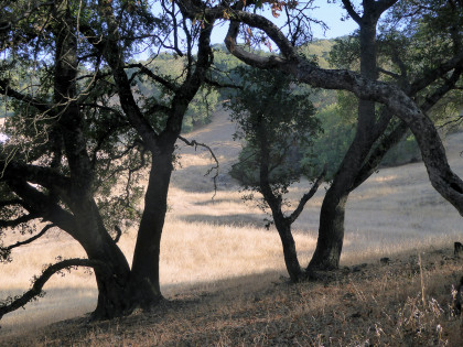 A view from Sonoma's Montini Preserve