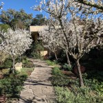 The Sonoma Garden: Meet the All-in-One Almond tree