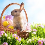 new-easter-bunny