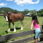 Blue Wing Adobe Trust steps in to save the Clydesdale Farm